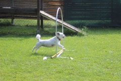 Dienstag_Hundeschule_012_resized