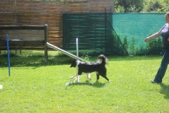 Dienstag_Hundeschule_027_resized