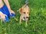 Training am See mit Kleinhundegruppe 24.06.19